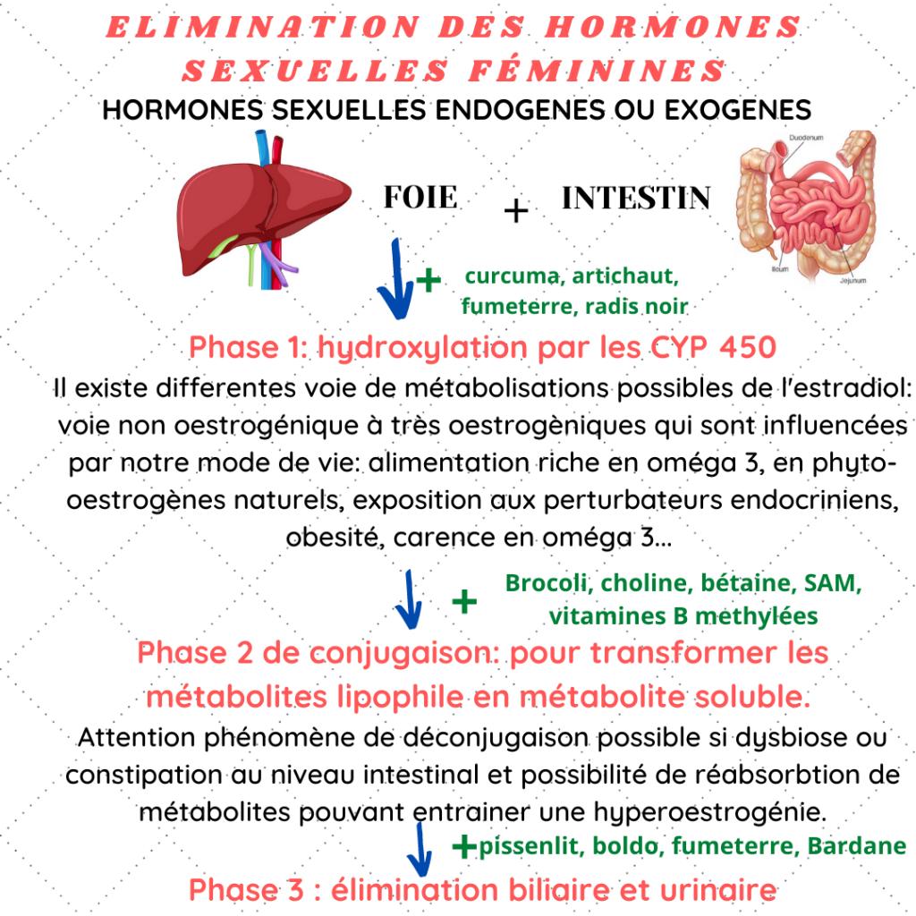métabolisme hormonal par le foie